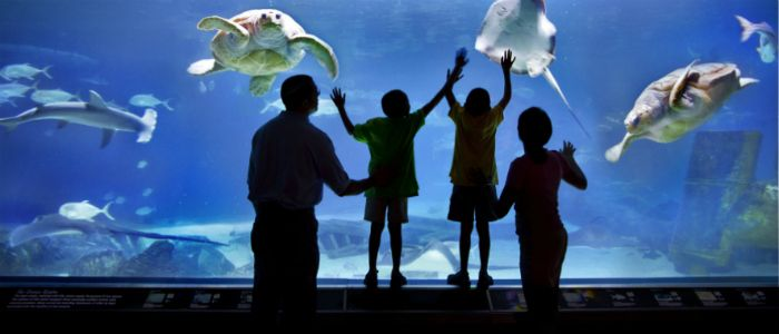 Overnights At The Camden Aquarium 60 Person And