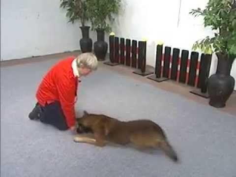 Vers vlees honden online dating