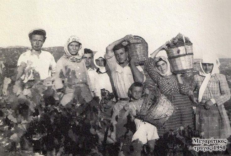 ΤΡΥΓΟΣ ΣΤΑ ΜΕΓΑΡΑ 1950