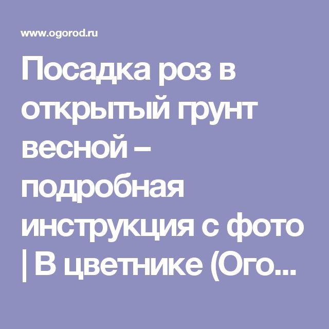 Посадка роз в открытый грунт весной – подробная инструкция с фото | В цветнике (Огород.ru)