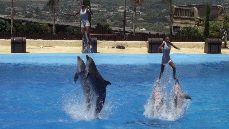 Delfiny, Hiszpania