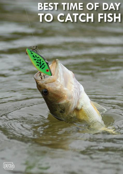 Anytime is a good time to go fishing, but there are peak times of day to catch fish | Iowa DNR