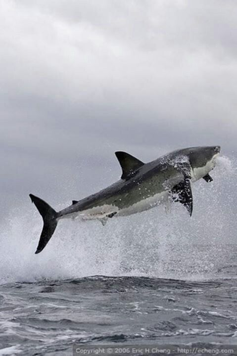 807 Best Sharks Whales Dolphins Rays Images On