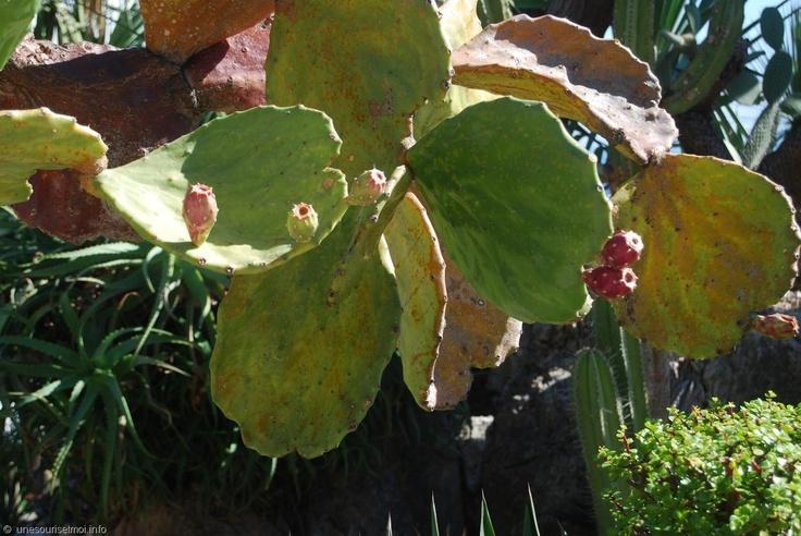 ./galeries/g1/cactus_monaco_jardin_exotique_02.jpg
