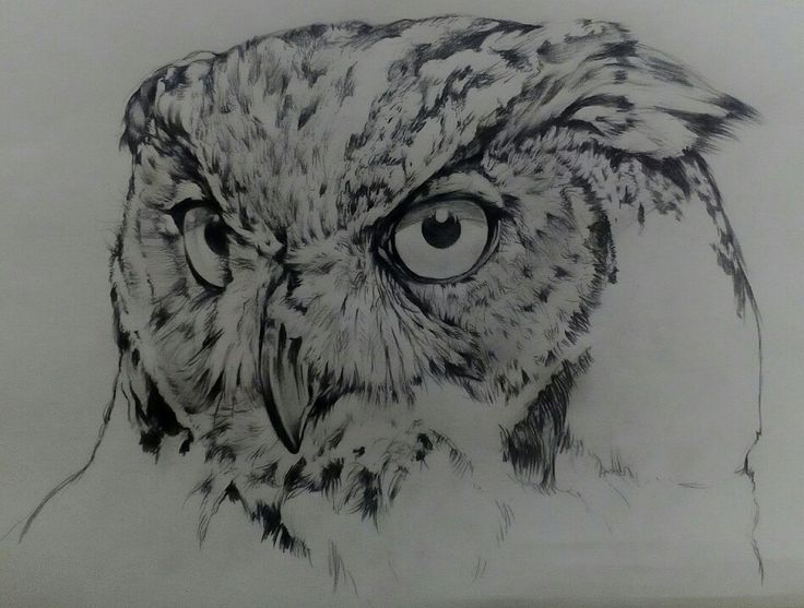 Sketch Potrait on Canson Paper A3 By Artist Mike Eleftheriou  Title: Owl see