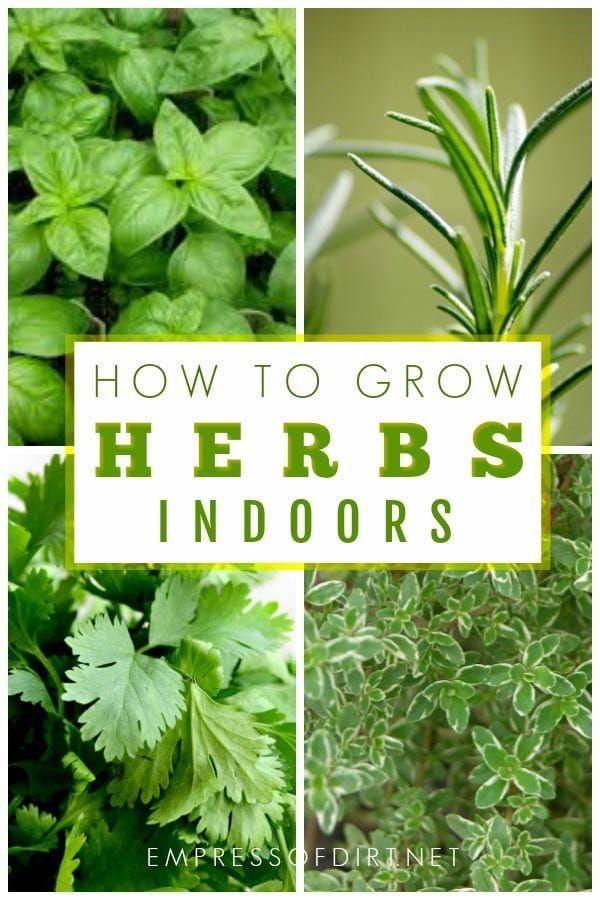 How To Grow Herbs Indoors Beginner S Guide Growing Herbs In