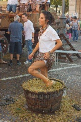 traditional preparation of the must for wine production; a girl crushes the grapes with their feet during the festival of typical italian wine on October 2 2011 in Cotignola (RA), Italy Stock Photo - 10793270