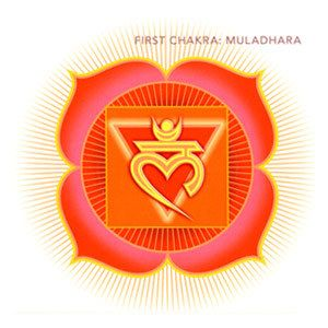 The Muladhara Chakra also known as the Root or First Chakra is essential for grounding in the physical in order to connect to the spiritual.