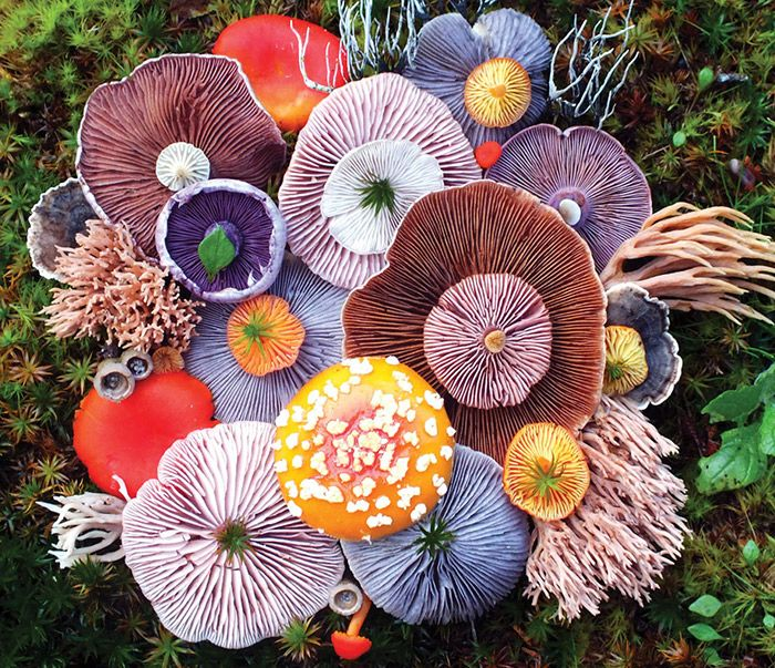 The Patternbank team are loving the Autumnal look & feel of Jill Bliss's vibrant fungi finds. Amazing textures, pattern structures and colour combination
