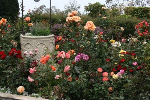 45 best images about rose gardens on pinterest gardens for Rose garden design