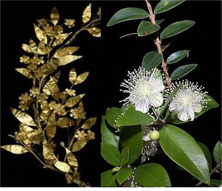 η μυρτιά ή μυρσίνη (Myrtus communis)