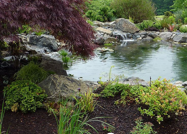 Koi pond natural pond with multiple waterfalls for for Water filtering plants for ponds