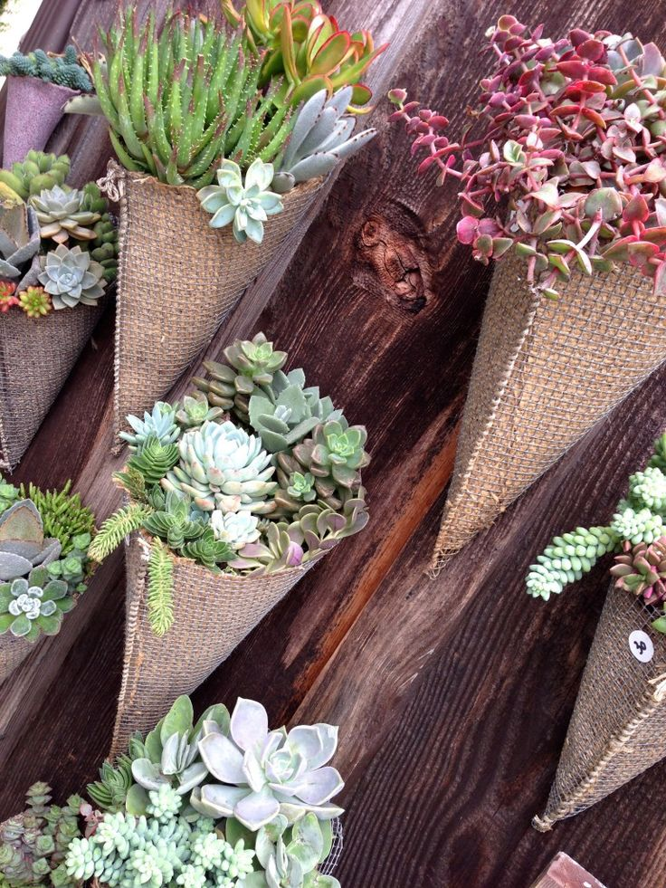 Burlap cone wall hanging planters with a variety of succulent plants