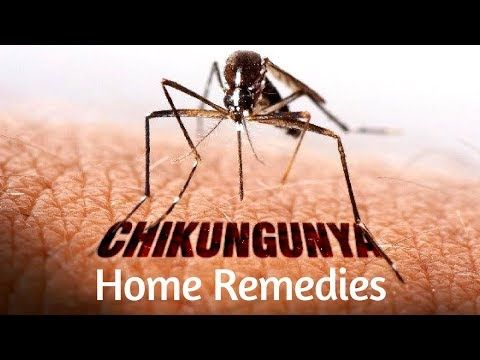 #HealthyLivingTips 5 Home Remedies For Treating Chikungunya Fever Symptoms #NaturalCure #Health