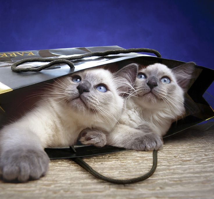Topalis love bags