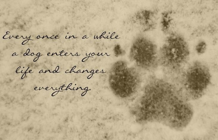 Inspirational Dog Quote #4