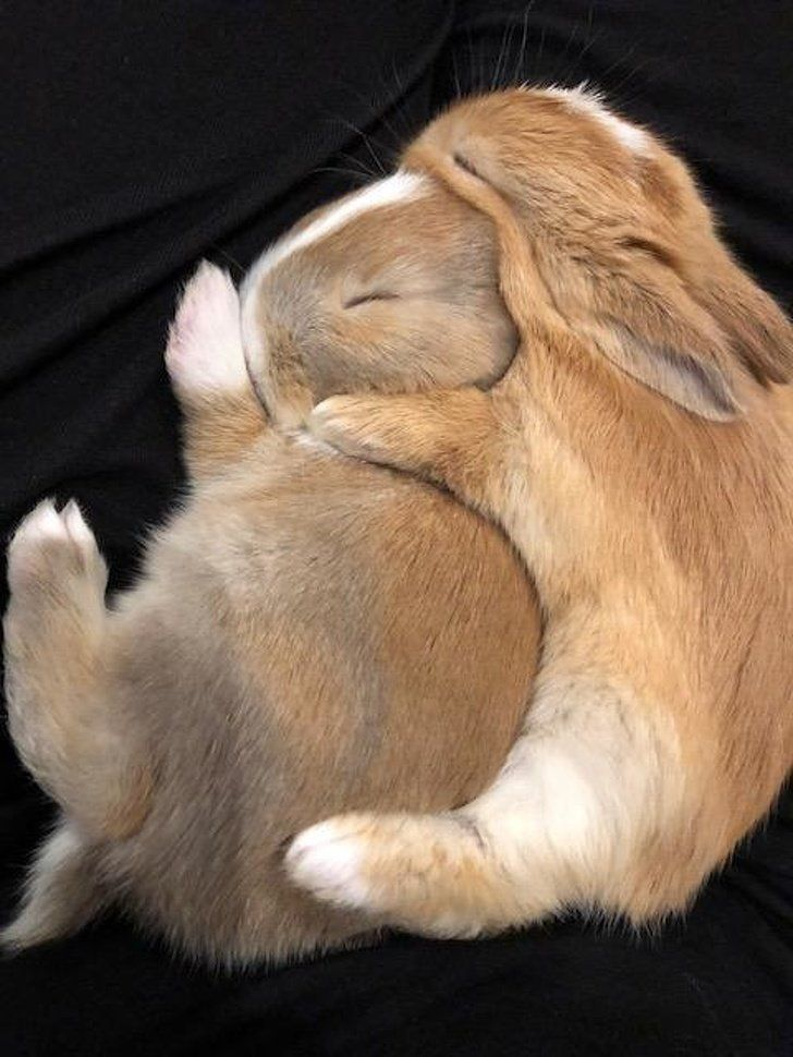 19 Emotional Animals That Are So Adorable They Deserve to Win an Oscar – #Adorab… – Erin