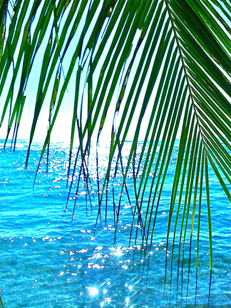 Palm dream...i want to be napping under this palm tree with this view right NOW!