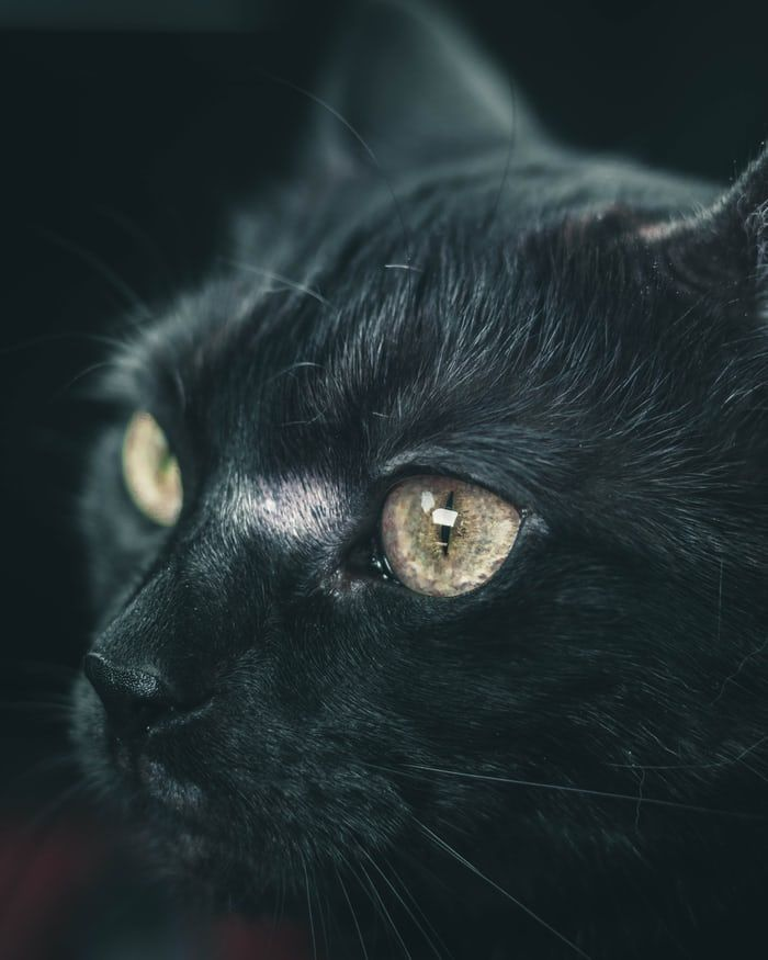 20 Cat Pictures Images Hd Download Free Images Stock Photos On Unsplash Animals Beautiful Free Cats Kittens Cutest