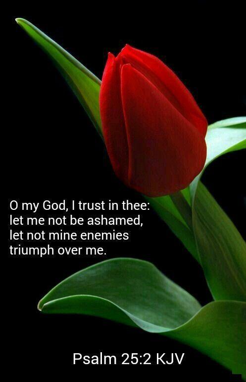 O my God,..... Psalm 25:2 KJV