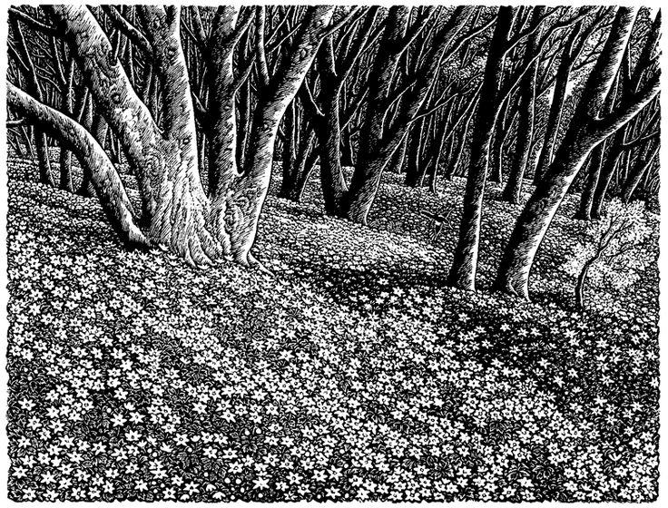 Sue Scullard, Wood Anemones, wood engraving