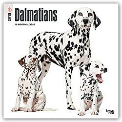 Dalmatian Calendar 2018 12 x 12 Inch Monthly Square Wall Calendar, American Dog Breeds (Multilingual Edition)