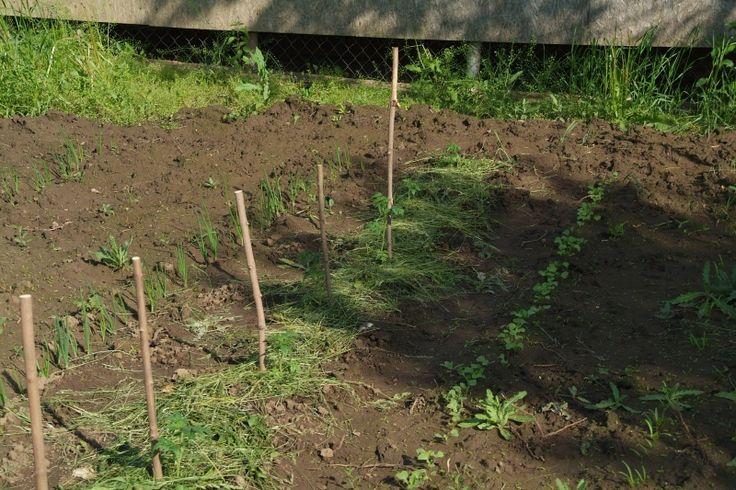 Szer-ETET-konyha: Kert - földmunkák nélkül