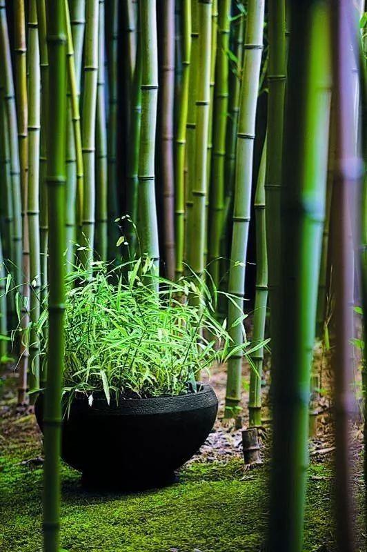 Non Invasive Bamboo Privacy Screens