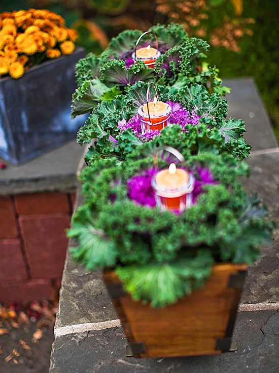 There is something stunning about repetition and contrasting colors, shown here by planting gorgeous flowering kale in a distressed wooden box.