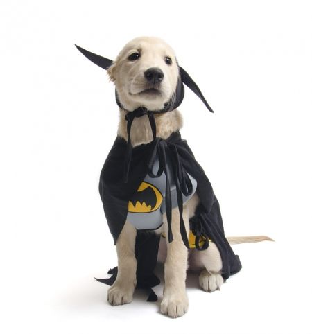 Superhero Dog Costumes From Bustedtees I Want Ittttt  sc 1 st  Meningrey & Batgirl Costume For Dogs - Meningrey