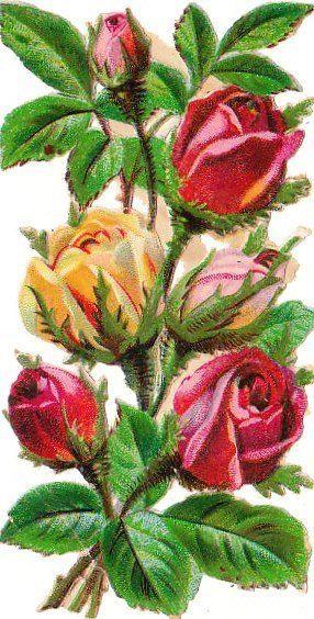Oblate um 1880 Blumen  Rosen (30)