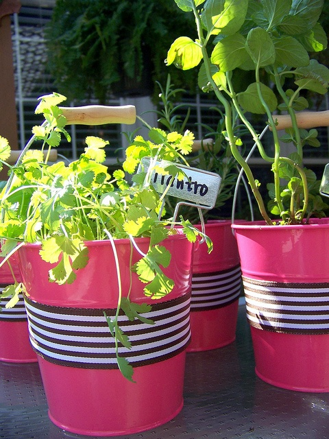 35 Best Images About Kitchen Herb And Spice Garden Ideas