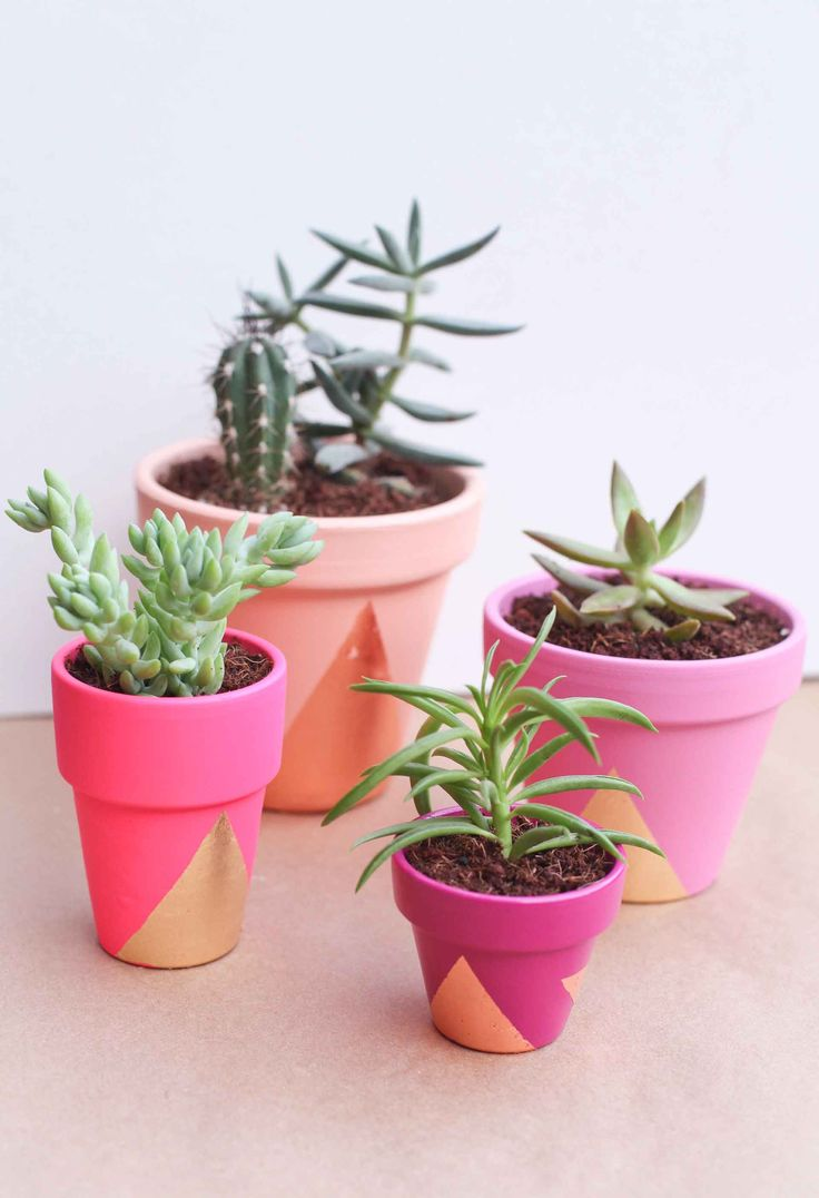 Succulents in neon pink and coral pots.