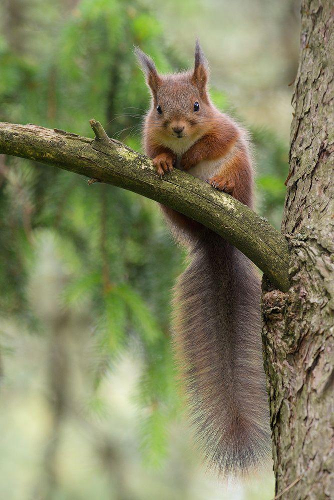 Eichhörnchen – Claudia Engel