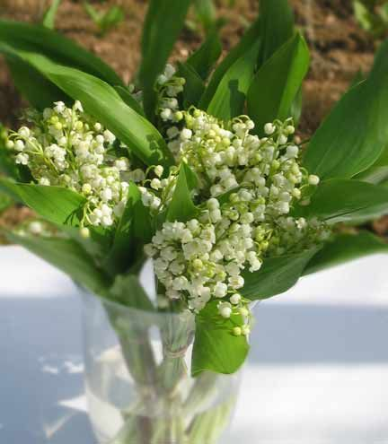 Lily-of-the-valley; so old world and evocative...