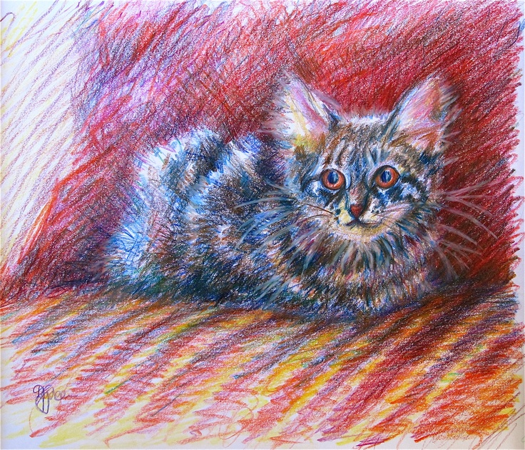 coloured pencil of a puddy tat