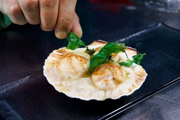 Scallop with frumenty and basil flavoured olive oil