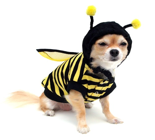 2016 fashion Pet Dog Clothes Coat Cat Bumble Bee Wings
