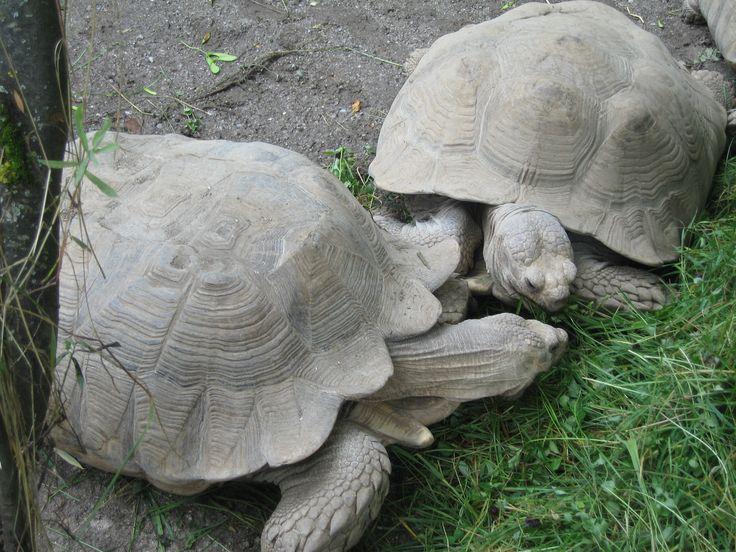 Turtles no jardim zoológico Hellbrunn