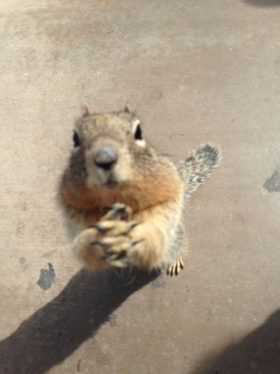 This squirrel was begging for more popcorn after two girls near me ran out. He came over to me and did this just as I took the photo because I couldn't believe how close he was! : aww