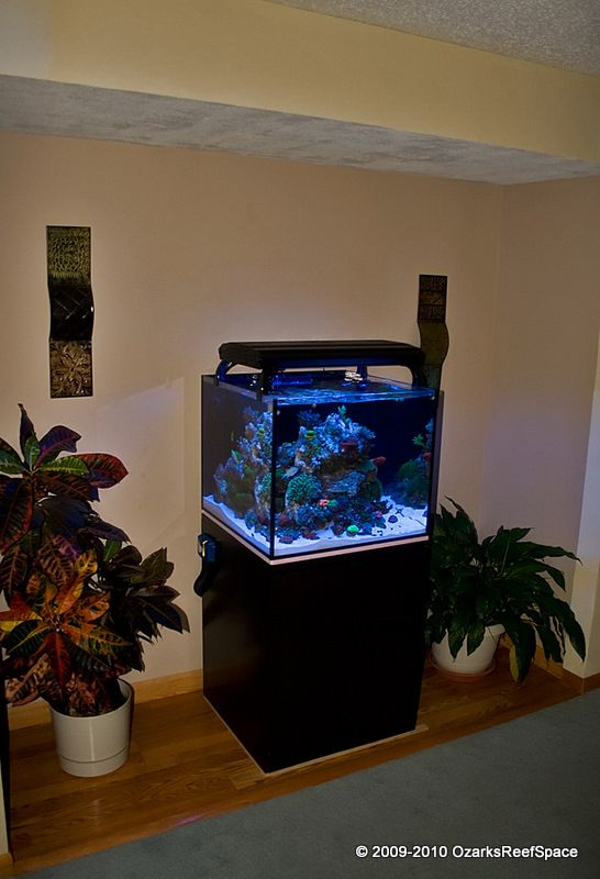 17 Best Images About Reef Cube Setup On Pinterest A Well