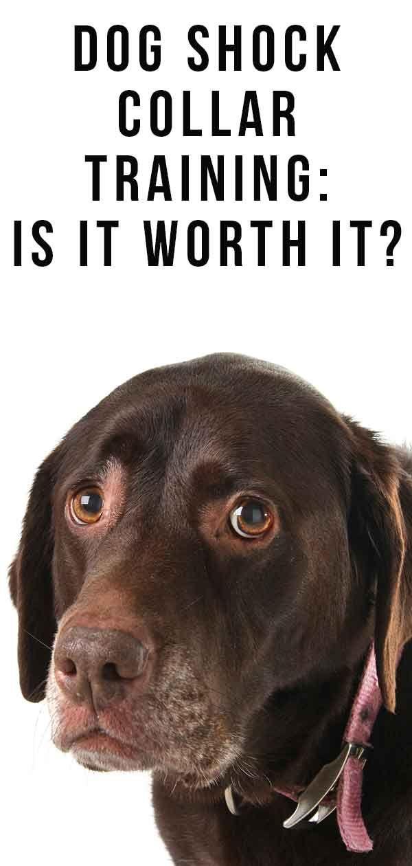 Dog Shock Collar Training Is It Worth It Dog Shock Collar