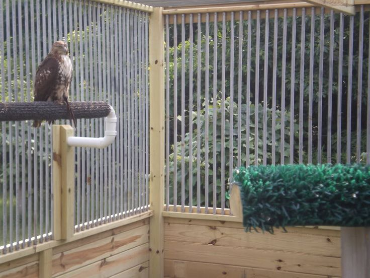 Mews And Weathering Designs Apprentice Falconry Forums
