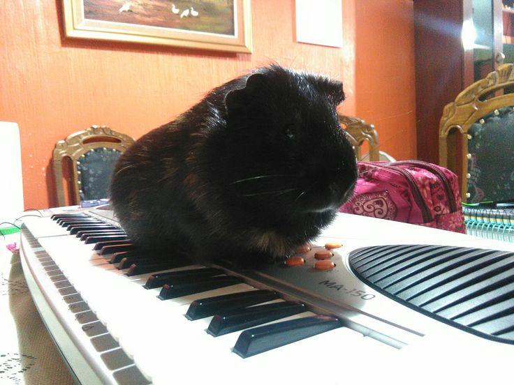 Chubi tocando piano >-<