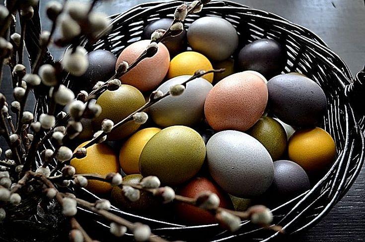 Здравствуйте, дорогие друзья) Очень скоро самый светлый праздник - Пасха. В супермаркетах и на рынках уже появилась целая куча всевозможных наборов красителей, наклеечек и других украшательств. А ведь у нас есть возможность воспользоваться тем, что дала нам природа) Натуральные красители не принесут вреда. А еще можно красить яйца с детками, они будут в…