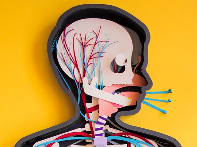 Paper Stop Motion Teaser for the Human Body Anatomy App stop motion paper kids illustration app anatomy (paper)