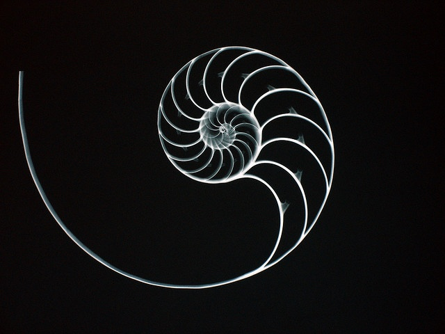 x-ray capture of chambered nautilus shell.