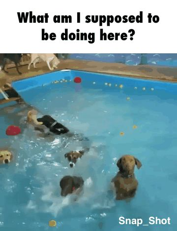 What am I supposed to be doing here? funny pics, funny gifs, funny videos, funny memes, funny jokes. LOL Pics app is for iOS, Android, iPhone, iPod, iPad, Tablet