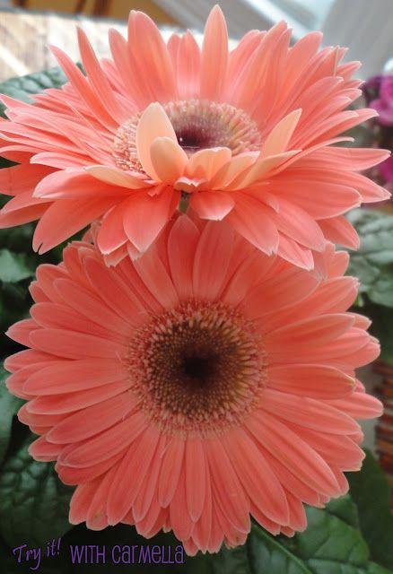 <3 Peach Flowers | peach wedding | www.endorajewellery.etsy.com