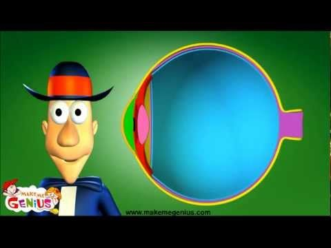 Sense of Sight - How Human Eyes Work